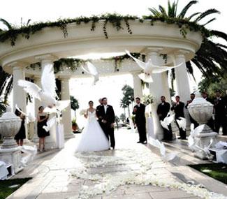 Palomas blancas para bodas